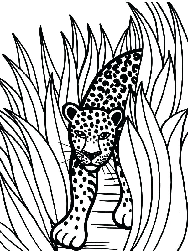 600x802 Rainforest Animals To Color Fresh Animal Coloring Sheets Free