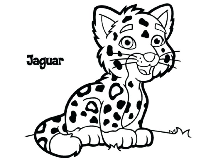 736x552 Rainforest Jaguar Coloring Pages Animal For Kids Coolest On Free