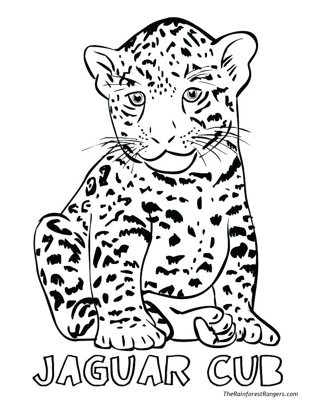 640x828 Best Of Jaguar Coloring Pages Images T Coloring Pages Realistic