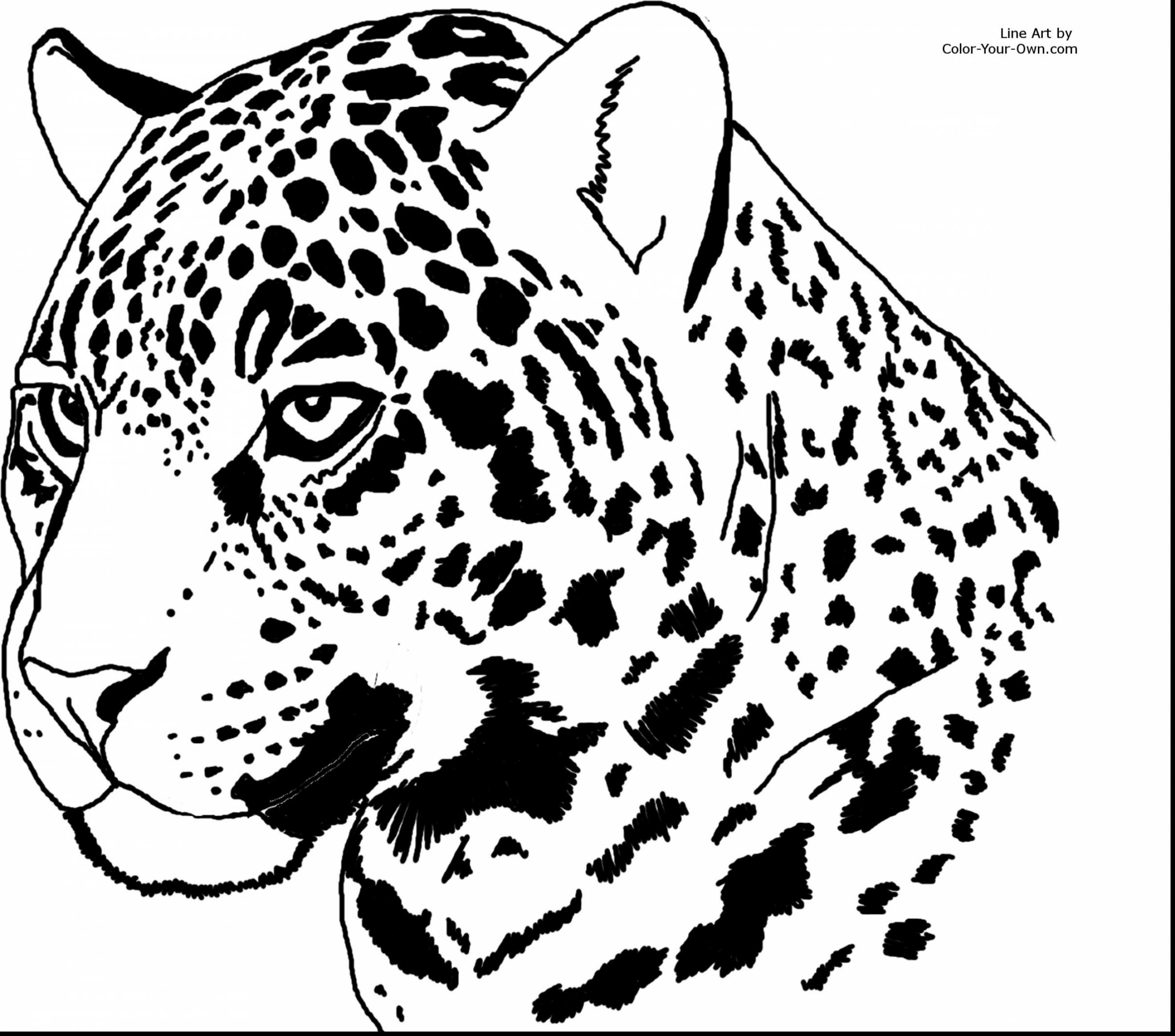 2640x2328 Coloring Pictures Of Jaguar Cars Best Of Outstanding Jaguar