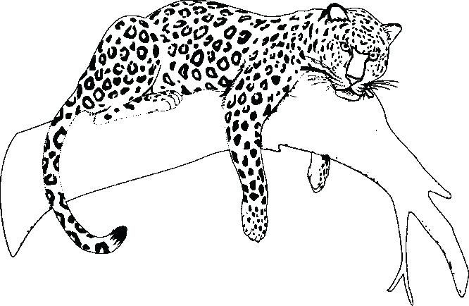 Jaguar Car Drawing at GetDrawings Free for personal