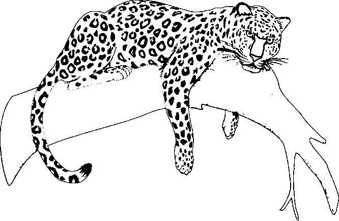 Jaguar Car Drawing at GetDrawings | Free download