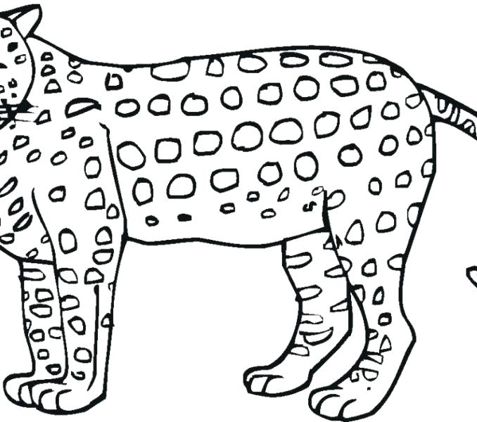 678x600 Best Of Jaguar Coloring Pages Images Printable Jaguar Pictures