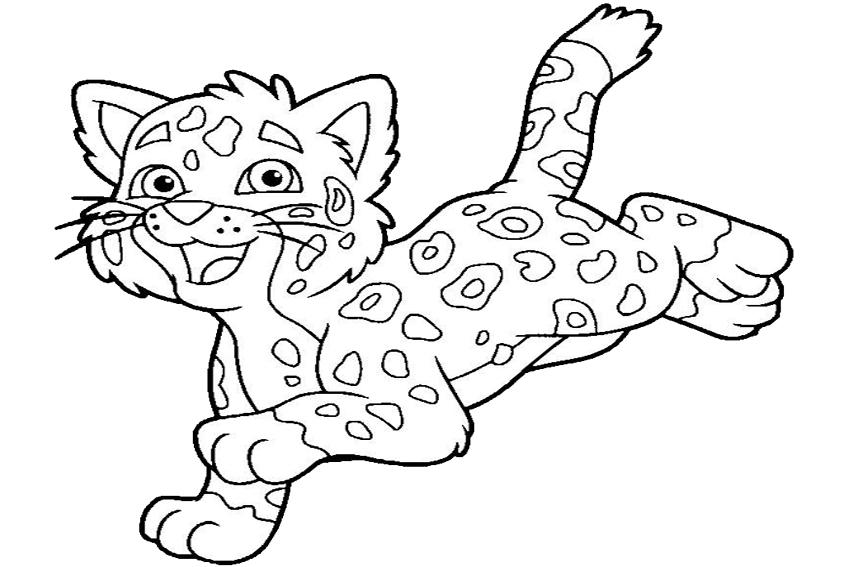 850x567 Jaguar Coloring Pages