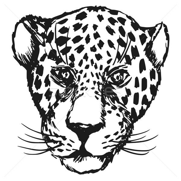 600x600 Jaguar Stock Photos, Stock Images And Vectors Stockfresh