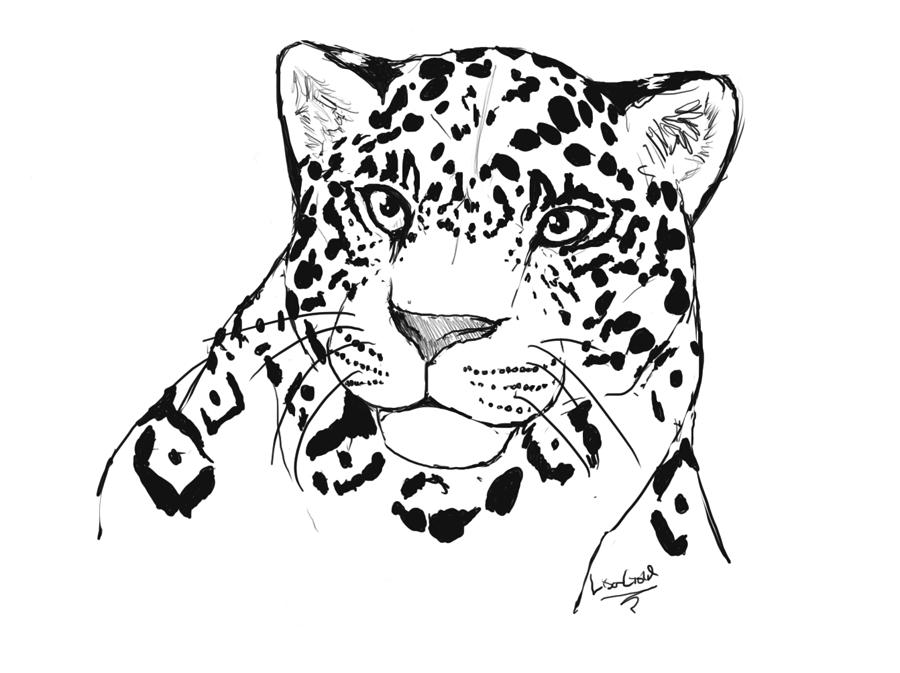 900x673 Jaguar By Chrysaetos Pteron