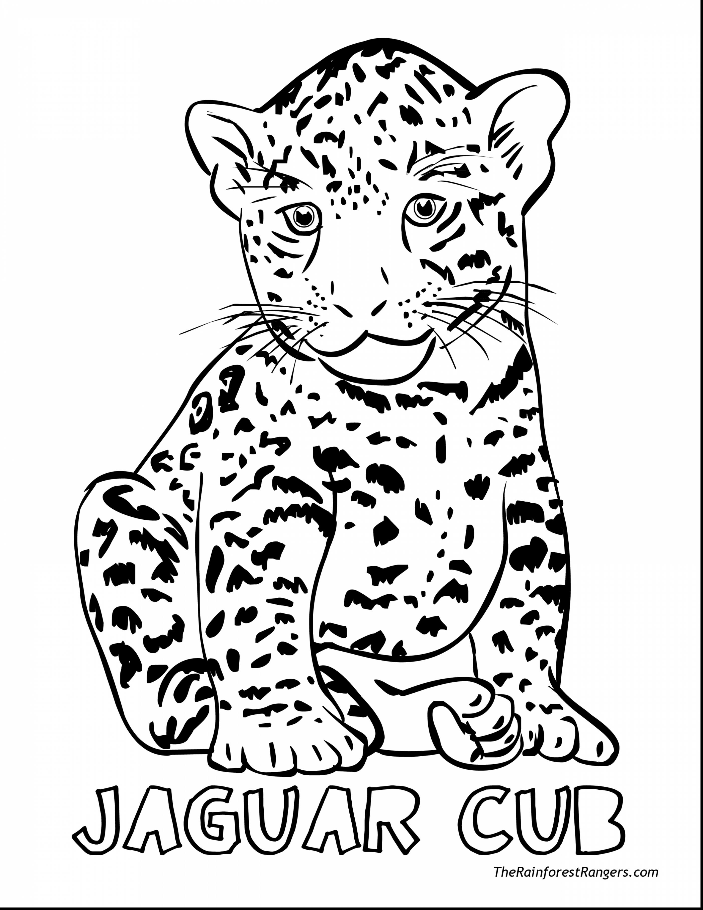 Jaguar Cartoon Drawing At GetDrawings