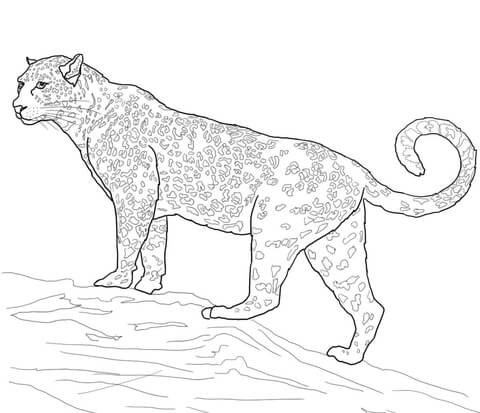 480x413 Jaguar Big Cat Coloring Page Free Printable Coloring Pages