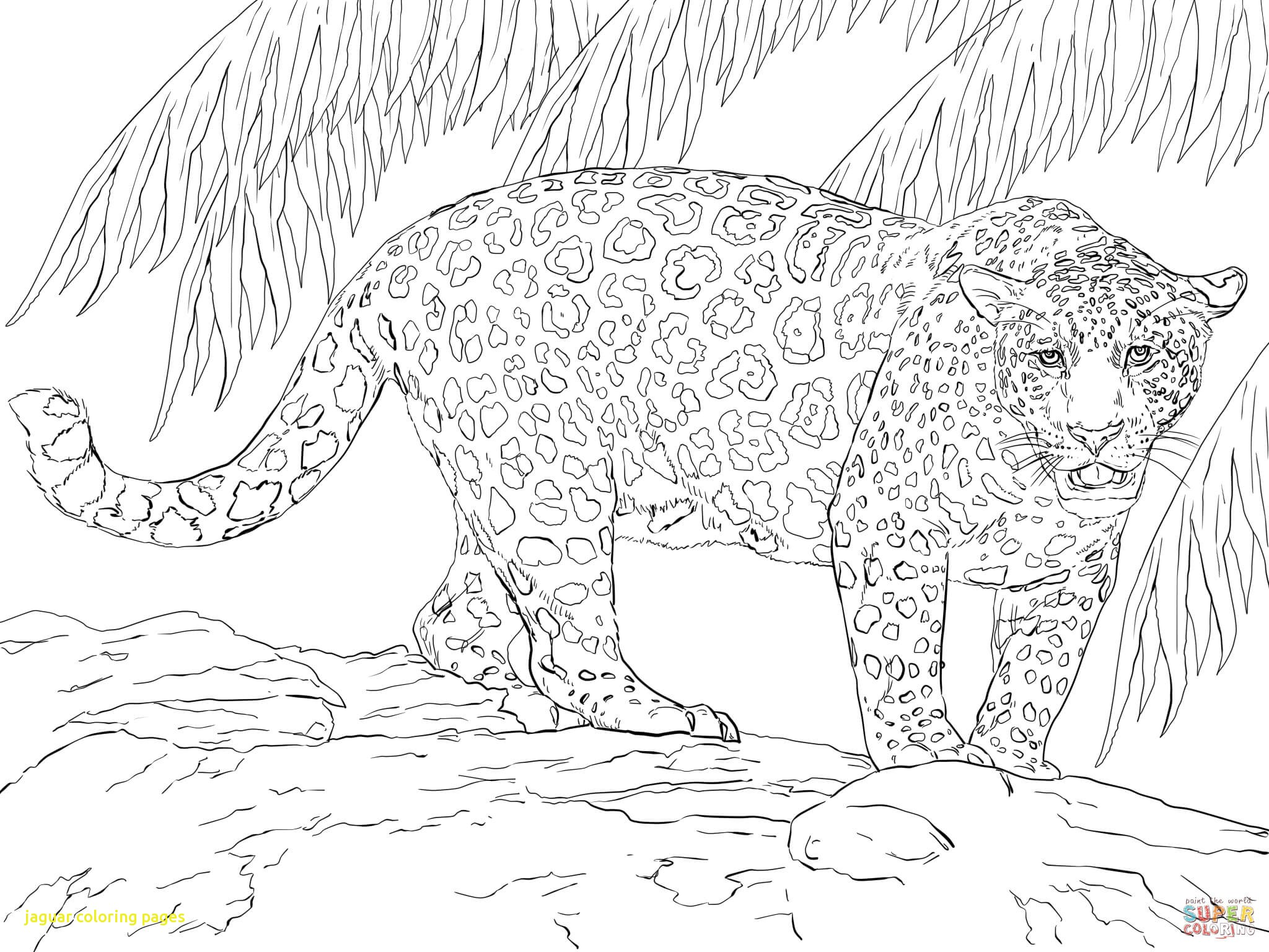 2048x1536 Jaguar Coloring Pages With Great Jaguar Coloring Page