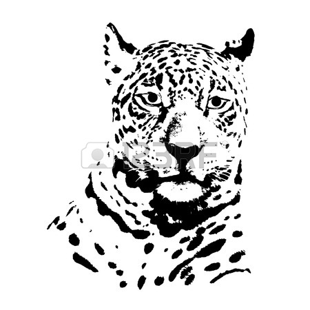 450x450 Jaguar Stock Photos. Royalty Free Business Images