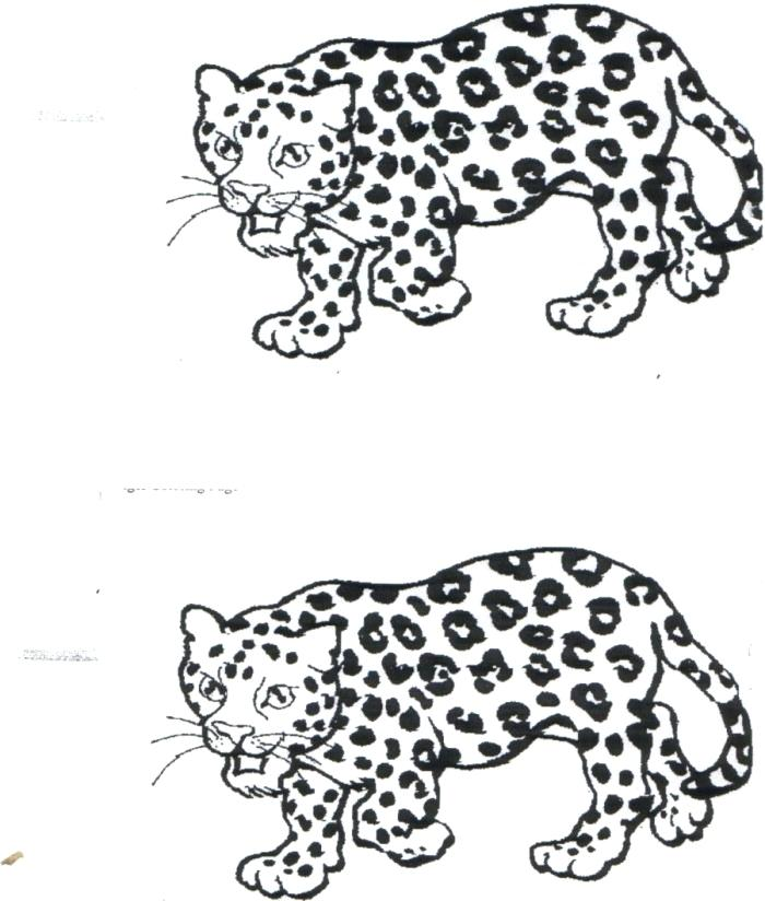 700x824 Baby Jaguar Coloring Pages Baby Jaguar Coloring Pages Free Baby