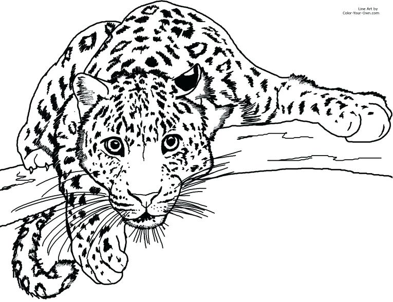 765x588 Cute Leopard Coloring Pages Printable To Humorous Print Image Baby