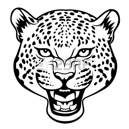 Jaguar Face Drawing