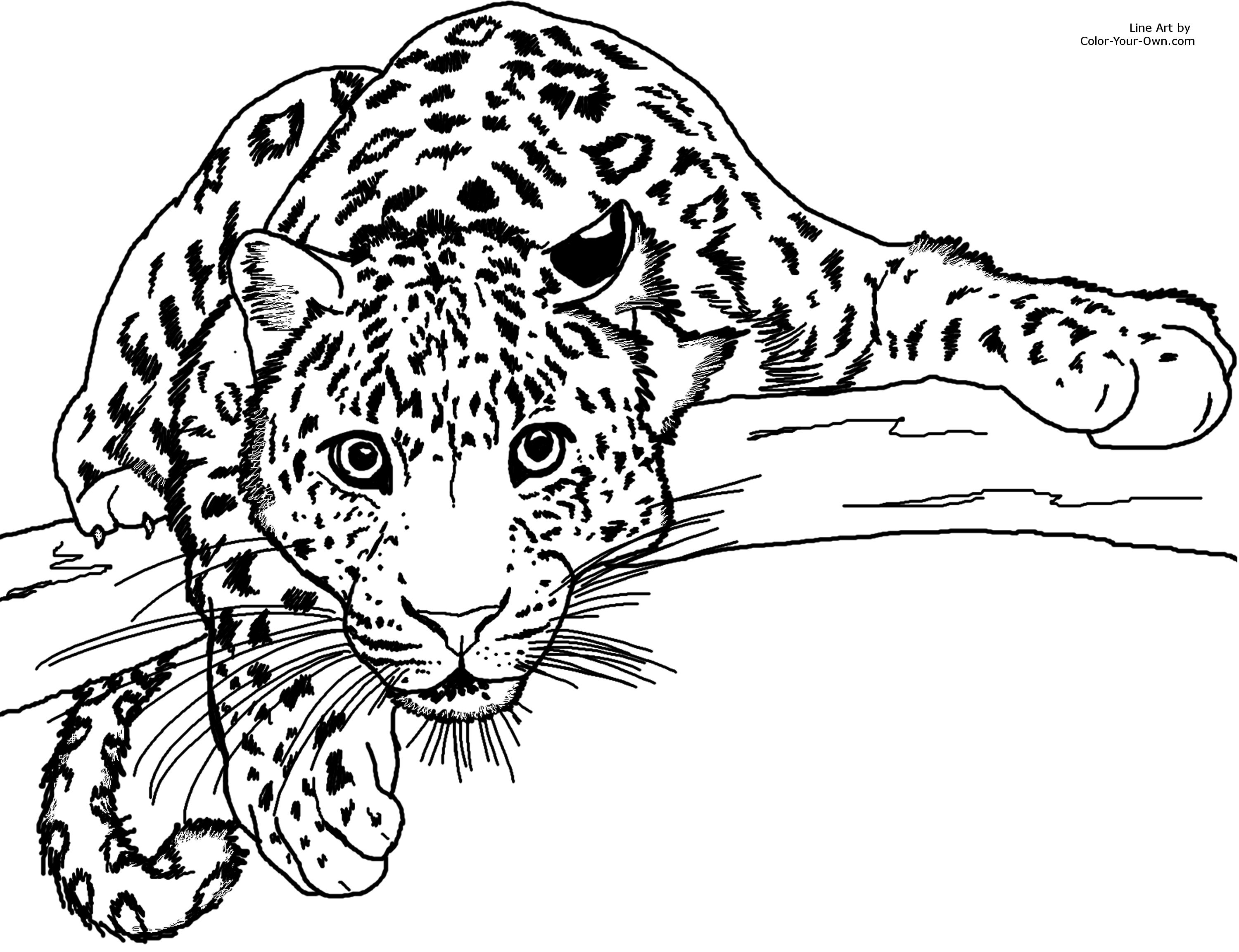 3000x2304 Jaguar Coloring Page