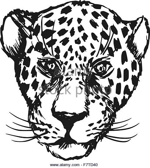 Jaguar Face Drawing At Getdrawings Com