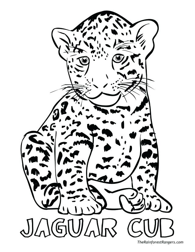640x828 Baby Jaguar Coloring Pages For Kids Jaguar Coloring Pages Picture