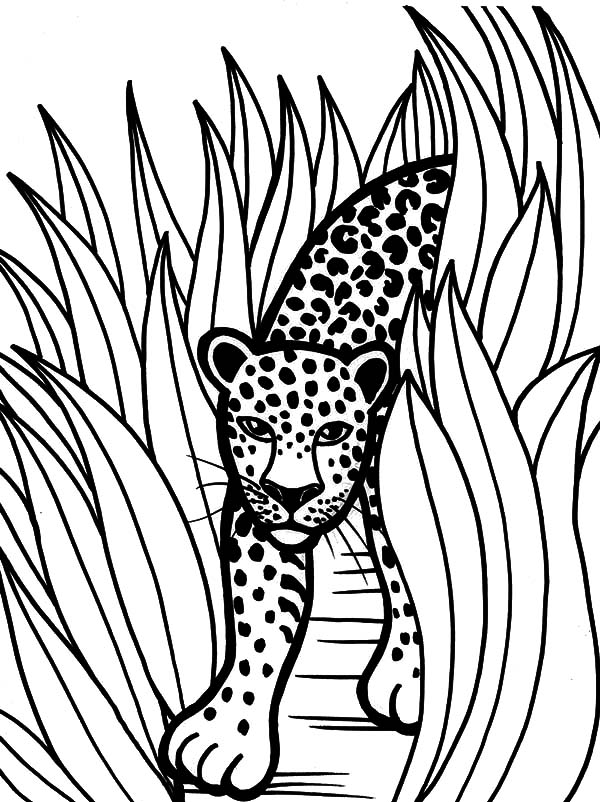 Jaguar Head Drawing