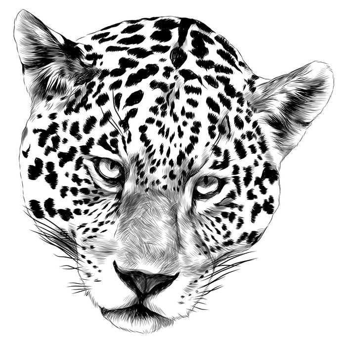 700x700 Jaguar Head Sketch Vector Graphics Monochrome Black And White