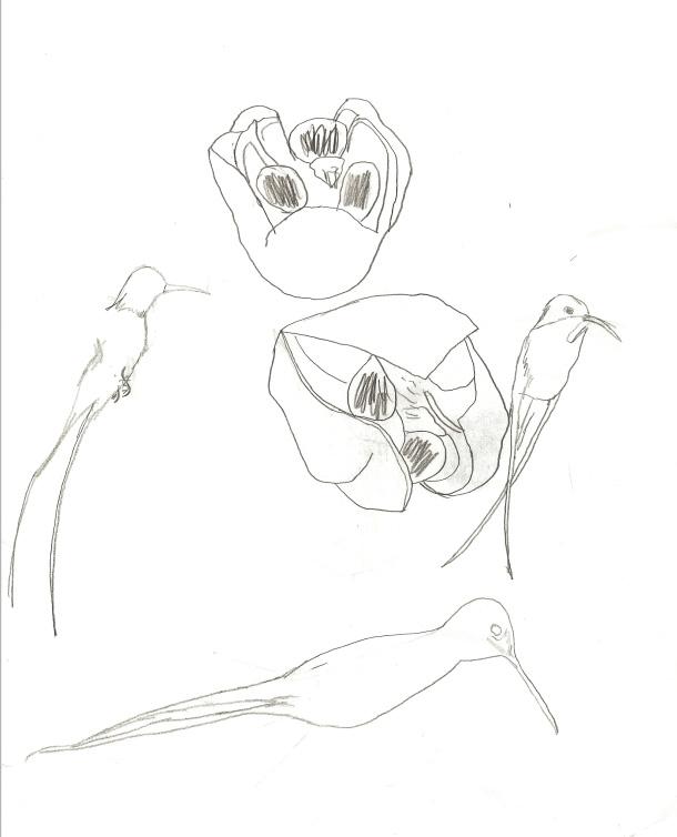 610x754 Ackee And Birds Aijalon Films