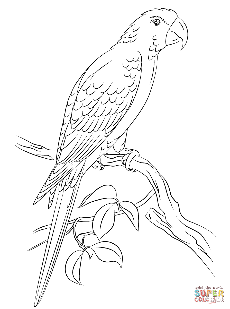 895x1200 Jamaican Red Macaw Coloring Page Free Printable Coloring Pages