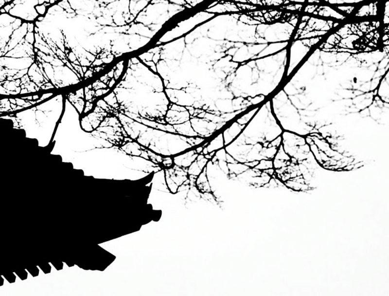 800x608 Snowboarding In Japan Simon Schreyer