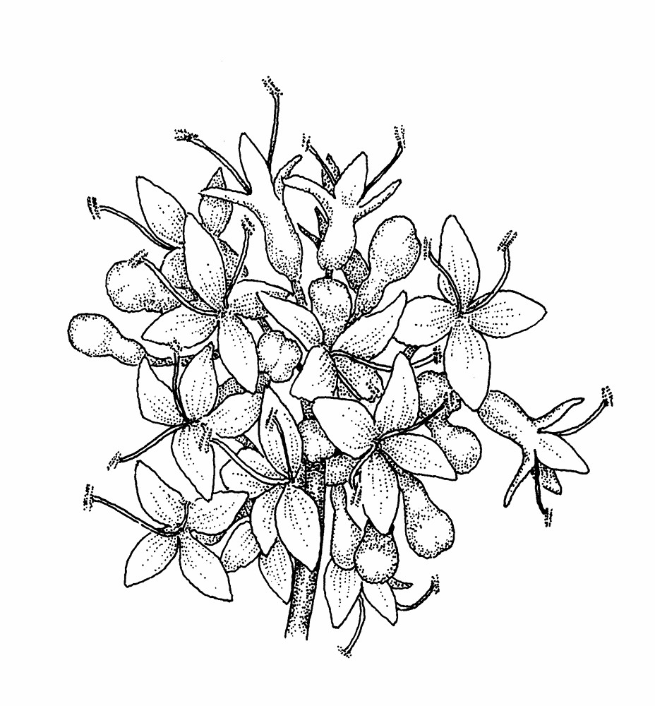 928x1000 Traditional Japanese Flowers Drawings
