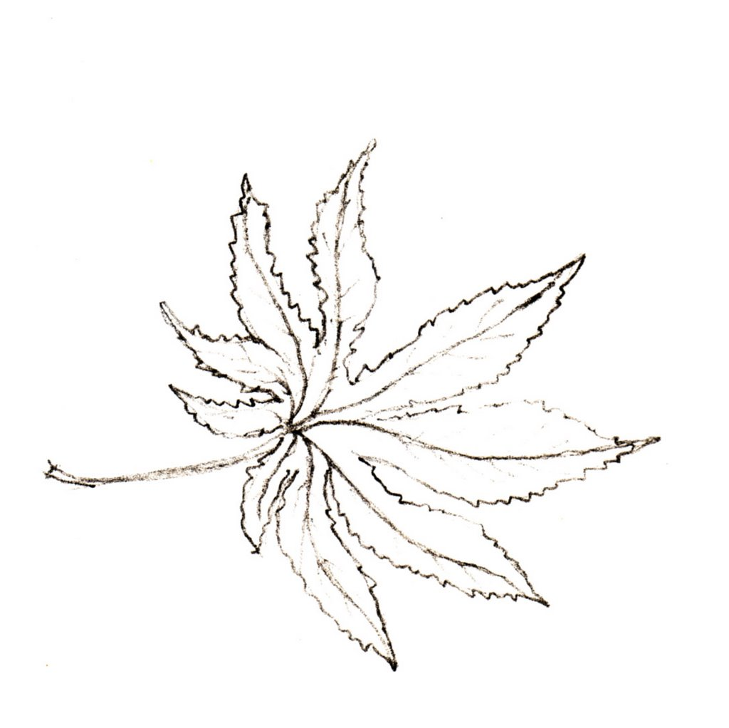 1024x1022 Cybercloister Memories Of Japan Leaf Of The Momiji Or Japanese