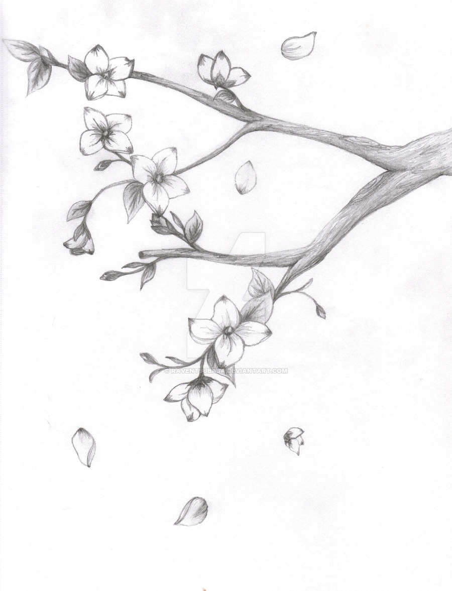 900x1177 Japanese Cherry Blossom Pencil Drawing Also Add Some Unopened