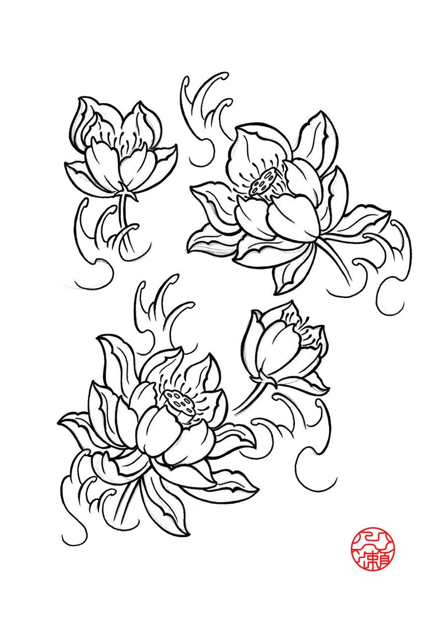 900x1273 Pictures Japanese Lotus Drawings,