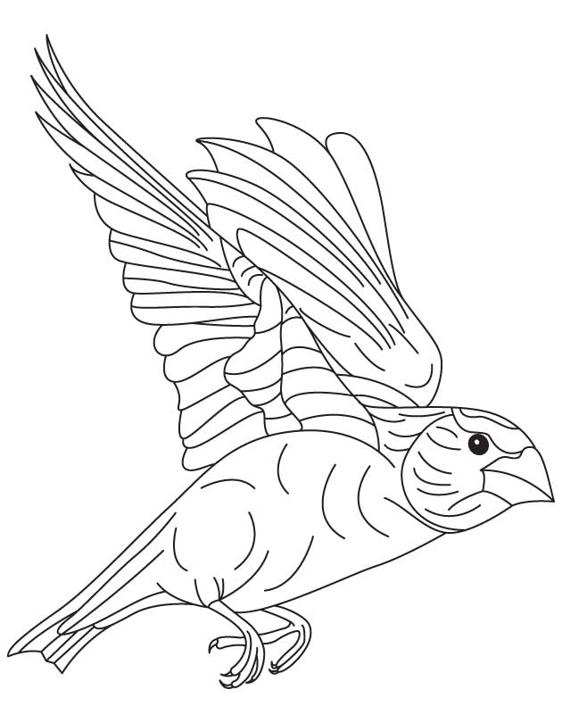 630x810 Japanese Bird Coloring Page Download Free Japanese Bird Coloring