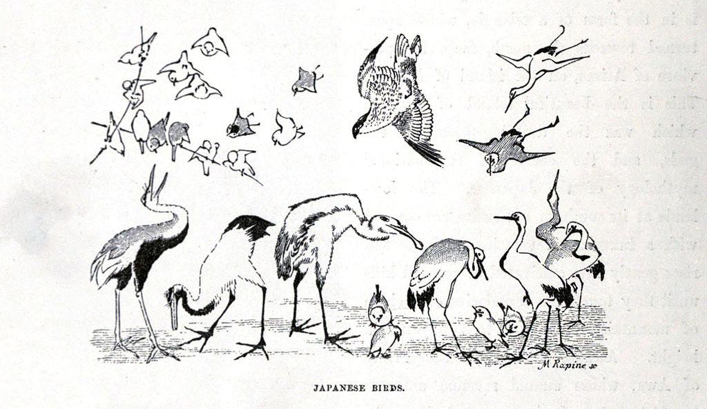 1024x593 Filejapanese Birds.jpg