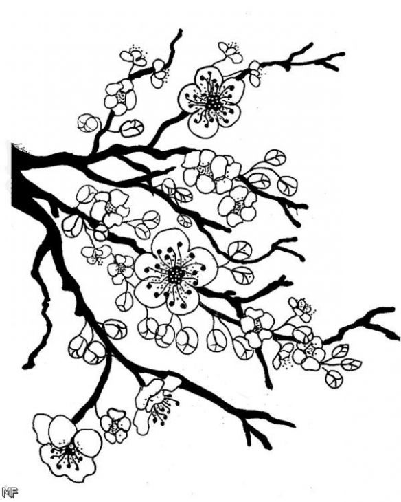 584x730 Japanese Cherry Blossom Coloring Sheets