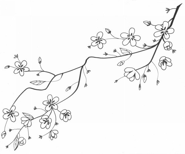 604x505 Cherry Blossom Tree Drawing Cherry Blossom Drawing Google Search