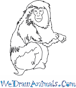 300x350 How To Draw A Japanese Macaque