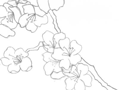 400x303 Japanese Cherry Blossoms (Black And White) By Super Crazy Weirdo