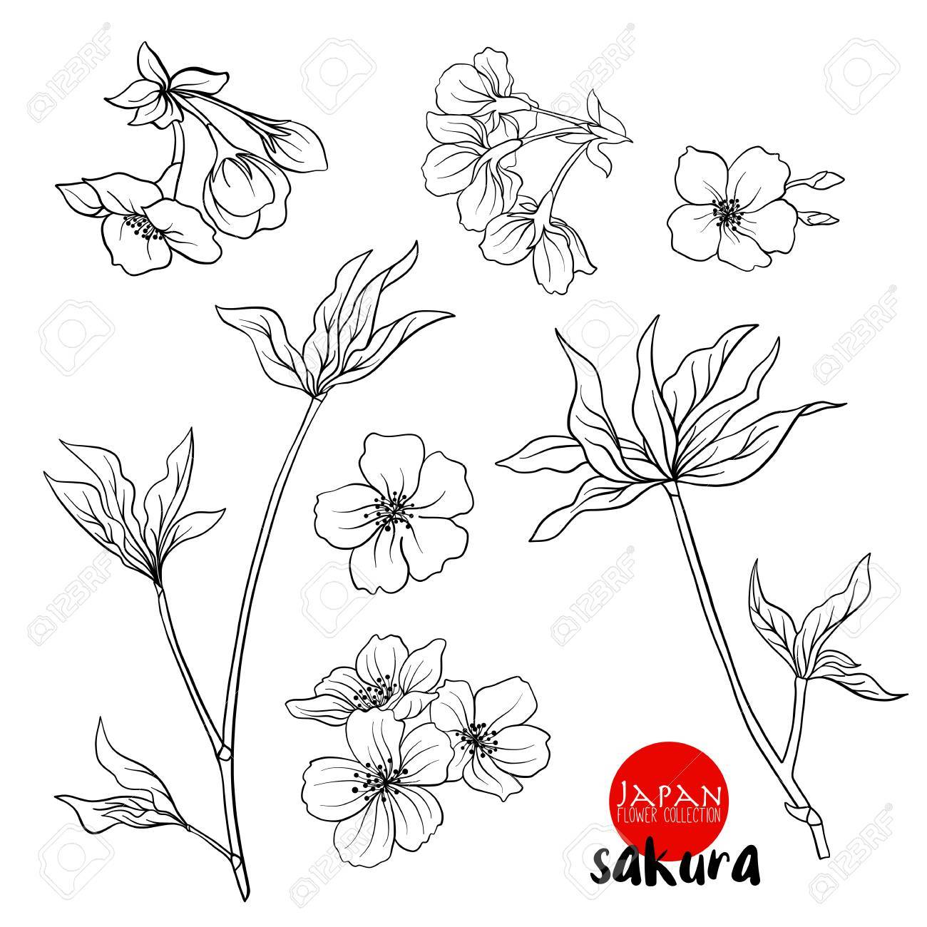 1300x1300 Branch Of Cherry Blossoms, Japanese Cherry. Stock Line Vector