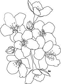 200x275 Japanese Cherry Blossoms Coloring Page For Adults