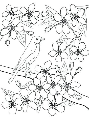 360x480 Good Cherry Blossom Coloring Pages Or Bird And Cherry Blossoms 59
