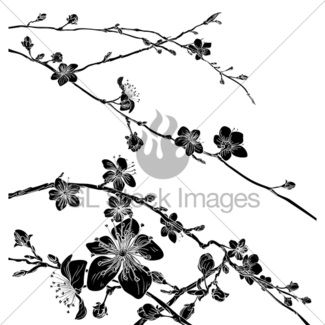 325x325 Peach Cherry Blossom Flower Pattern Design Element Gl Stock Images