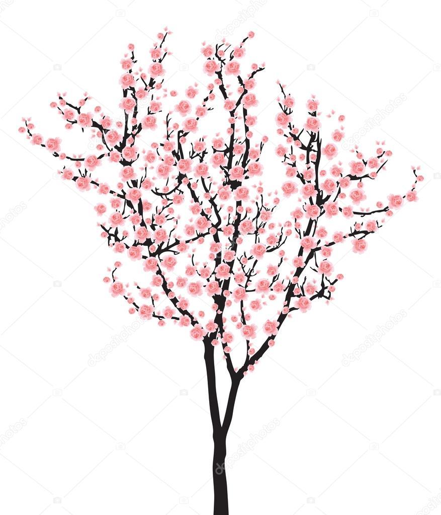 877x1023 Full Bloom Pink Sakura Tree (Cherry Blossom) On Black Wood Stock