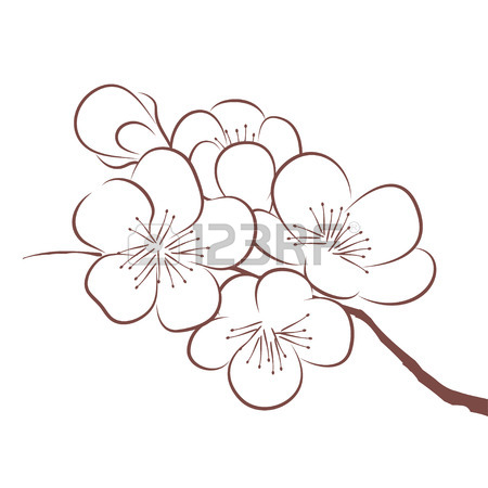 450x450 Spring Cherry Blossom Royalty Free Cliparts, Vectors, And Stock