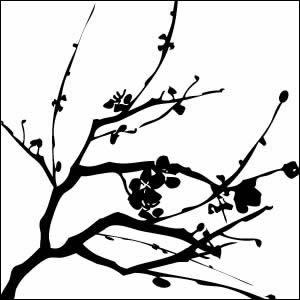 300x300 Cherry Blossom Sketch Black And White