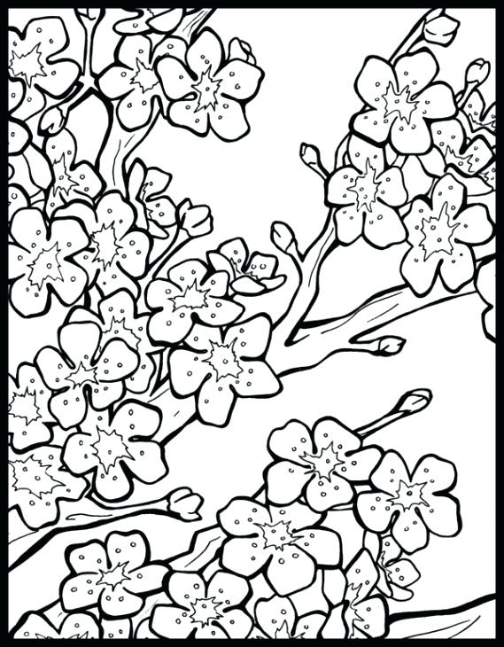 569x730 Good Cherry Blossom Coloring Pages For Drawn Cherry Blossom