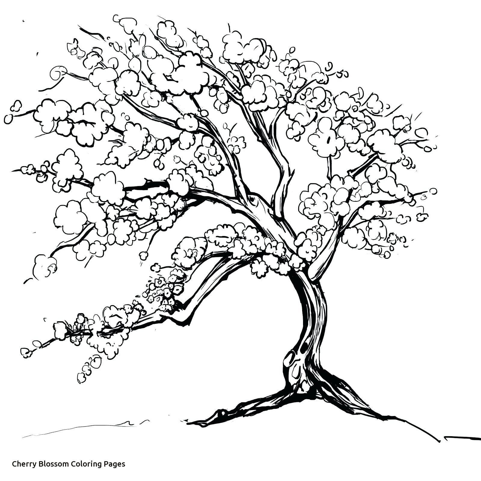 1600x1600 Coloring Cherry Blossom Coloring Pages Within Tree Page Glum