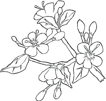 405x388 Japanese Art Coloring Pages Genesisar.co