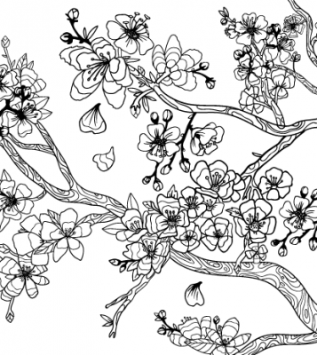 357x400 Japanese Cherry Blossom Coloring Sheets Design And Ideas Page 0