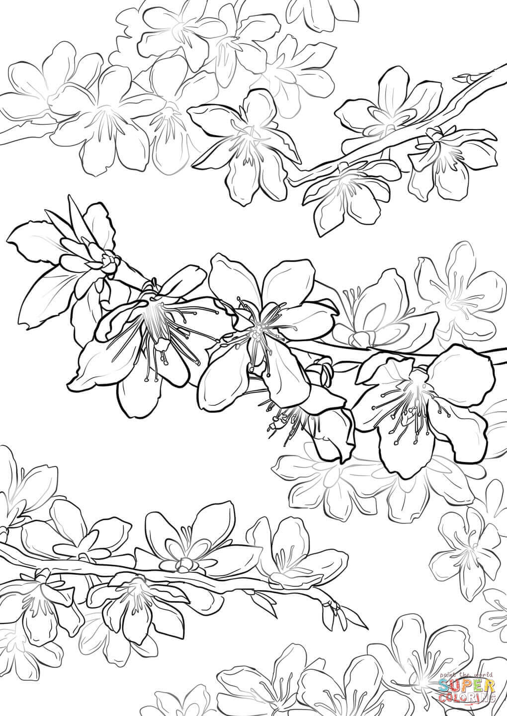 1020x1440 Cherry Blossom Coloring Pages
