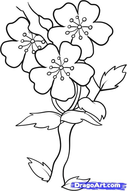 533x801 Easy To Draw Cherry Blossoms How To Draw Blossoms Step 7