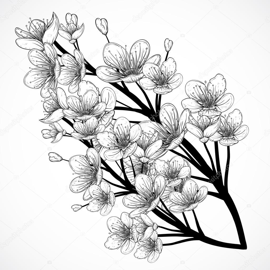 1024x1024 Japanese Cherry Blossom Drawing Black And White