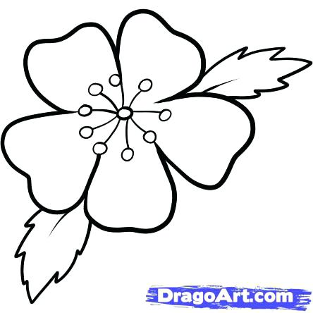 444x444 Lovely Cherry Blossom Coloring Pages For To Draw A Cherry Tree